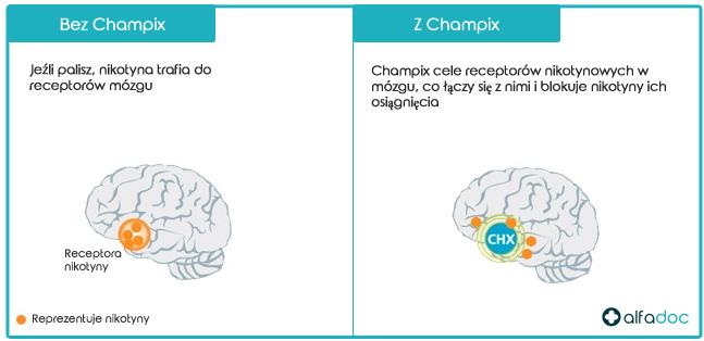 Champix---Jak-to-działa